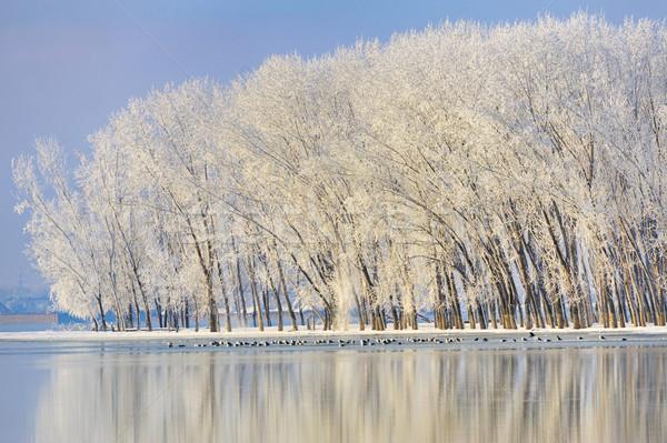 Gelado inverno árvores danúbio rio neve Foto stock © mady70