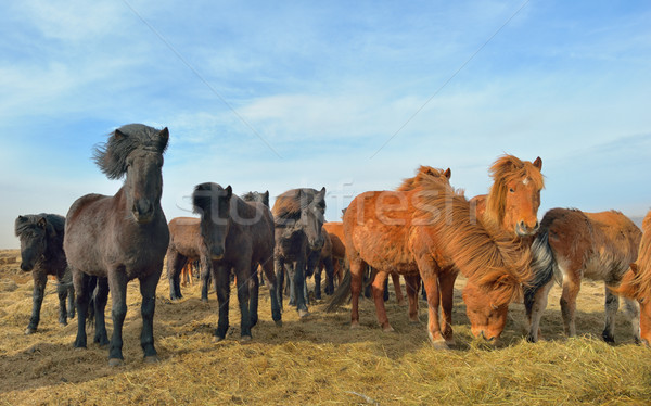 лошадей области небе весны солнце Сток-фото © mady70