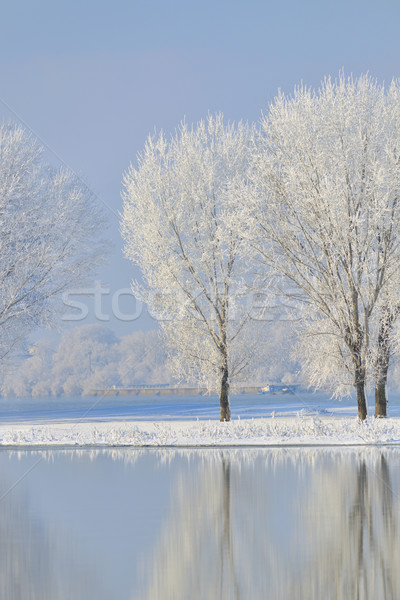 Frosty winter trees  Stock photo © mady70
