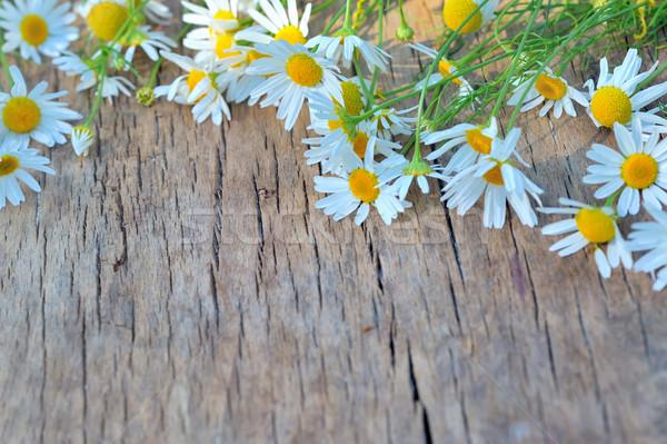 Fresco camomila flores mesa de madeira água natureza Foto stock © mady70