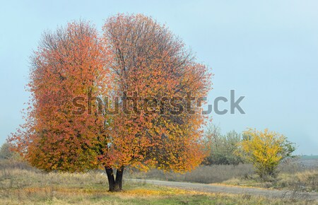 Solitary Single Tree Stock photo © mady70