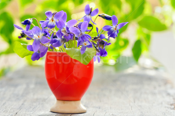 violets flowers (Viola odorata) Stock photo © mady70