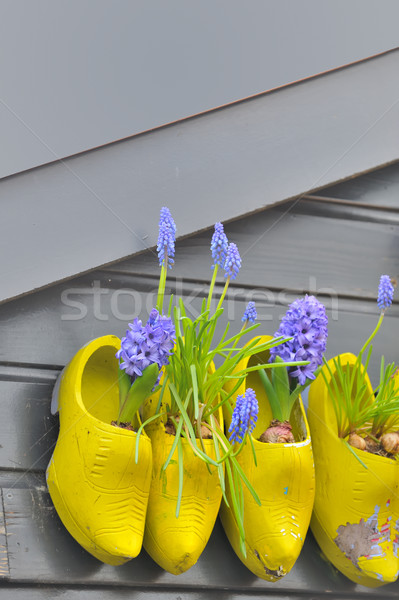 Wooden shoes Klomp like flowerpots with flowers Stock photo © mady70