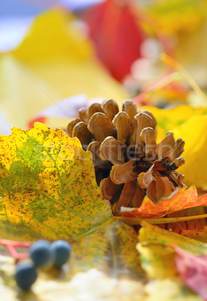 Yellow leaves and pine cone Stock photo © mady70