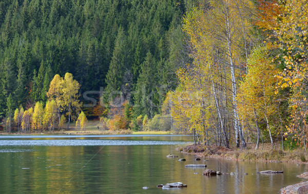 Autumn  with the yellow foliage, reflected in Lake Stock photo © mady70