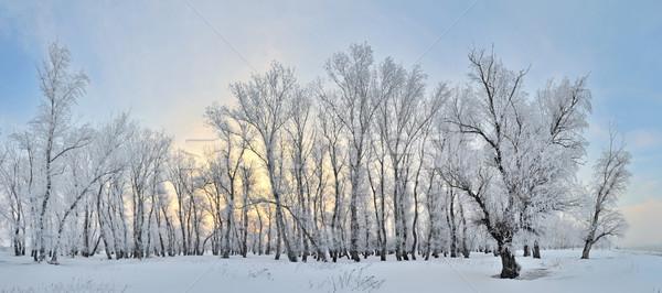 凍結 木 冬 風景 青空 空 ストックフォト © mady70