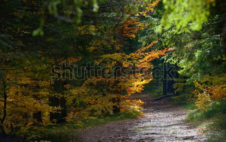 Verborgen bos pad hout landschap Stockfoto © mady70