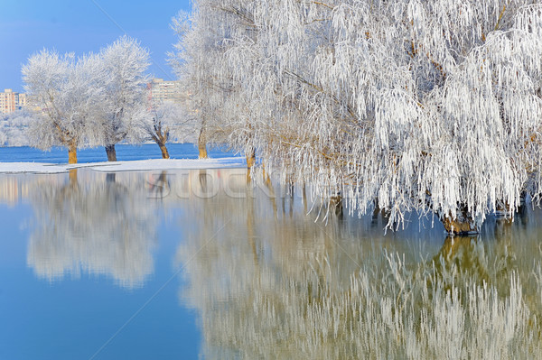 冬 木 カバー 霜 日没 自然 ストックフォト © mady70