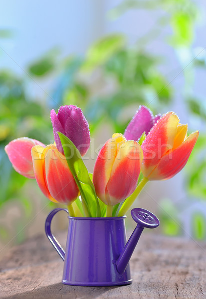 tulips in sprinkler garden Stock photo © mady70