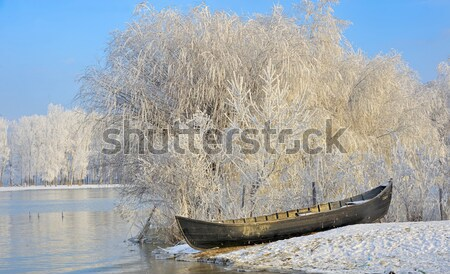 Frosty winter trees near Danube river Stock photo © mady70