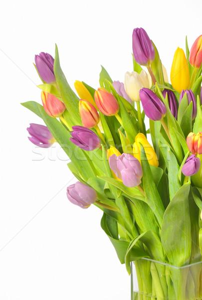 花束 カラフル チューリップ 花瓶 孤立した 白 ストックフォト © mady70