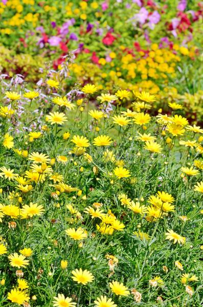 春の花 フィールド 花 光 葉 夏 ストックフォト © mady70