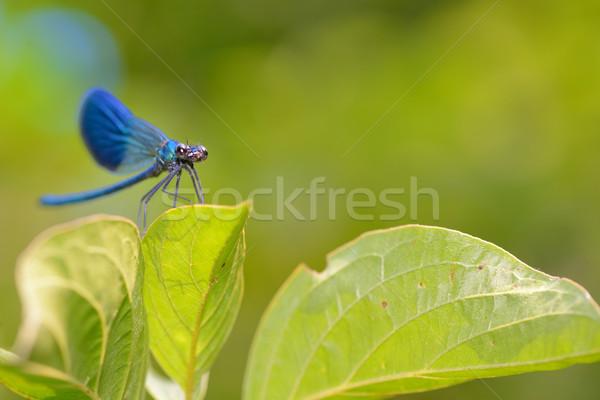 トンボ 森林 春 自然 美 動物 ストックフォト © mady70