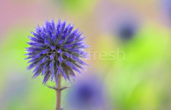 Globo flores natureza jardim azul bola Foto stock © mady70