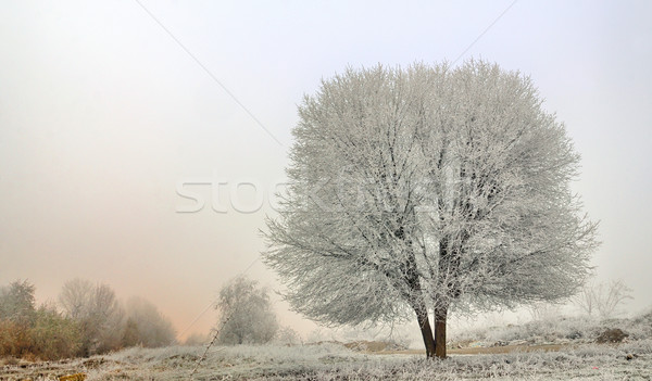 winter landscape of frozen trees Stock photo © mady70