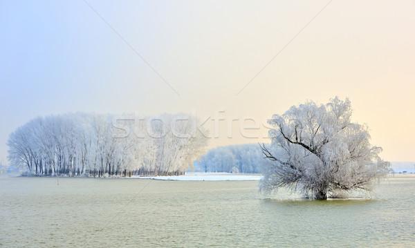 Ijzig winter bomen donau rivier hemel Stockfoto © mady70