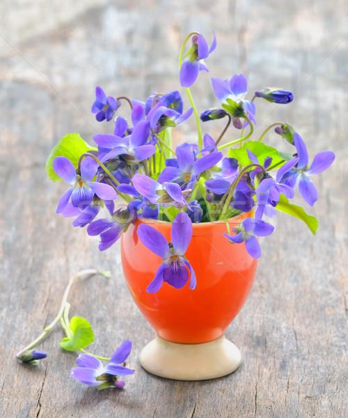 Bloemen natuur groene plant tuinieren paars Stockfoto © mady70