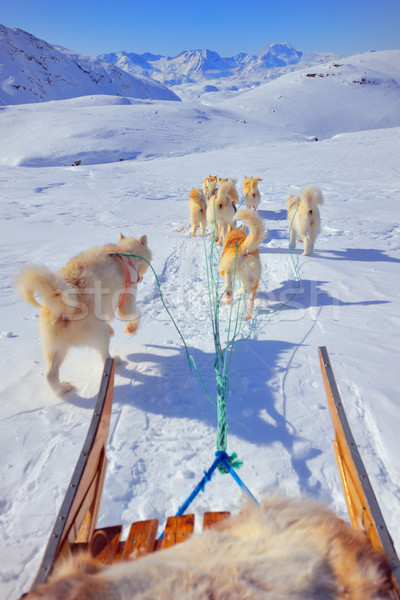 dog sledging Stock photo © mady70