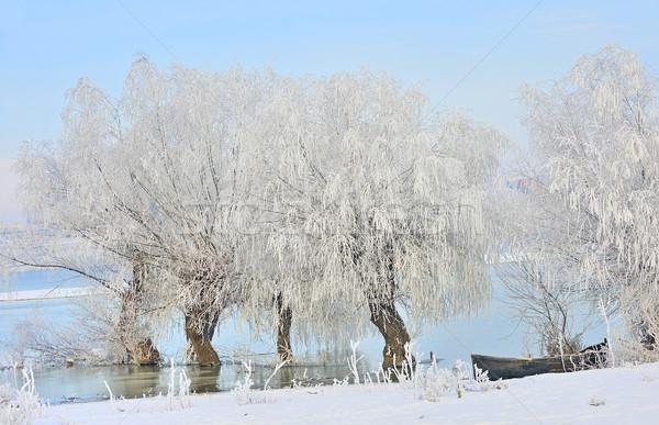 Сток-фото: морозный · зима · деревья · лодка · Дунай · реке