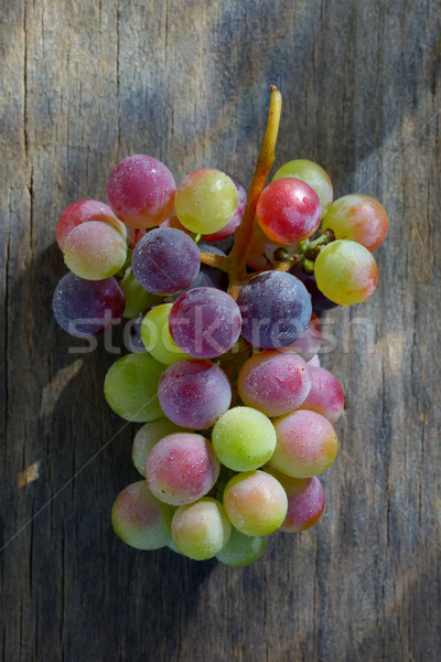 Unripe grapes Stock photo © mady70
