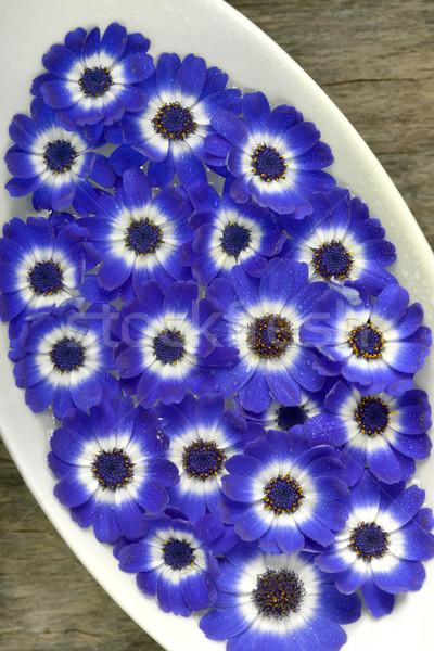 Kék fehér virágok váza virág kert Stock fotó © mady70