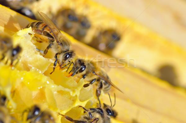 Сток-фото: пчел · улей · соты · продовольствие · Bee