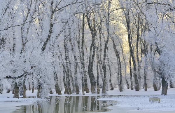 Ijzig winter bomen donau rivier water Stockfoto © mady70