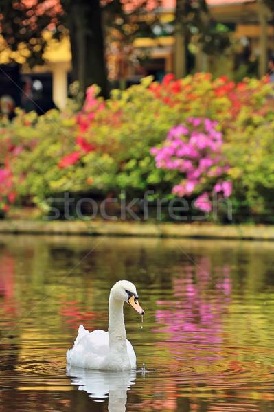 白鳥 湖 春 時間 水 風景 ストックフォト © mady70