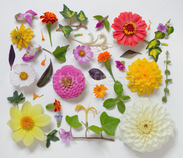 Stock photo: Selection of Various Flowers Isolated