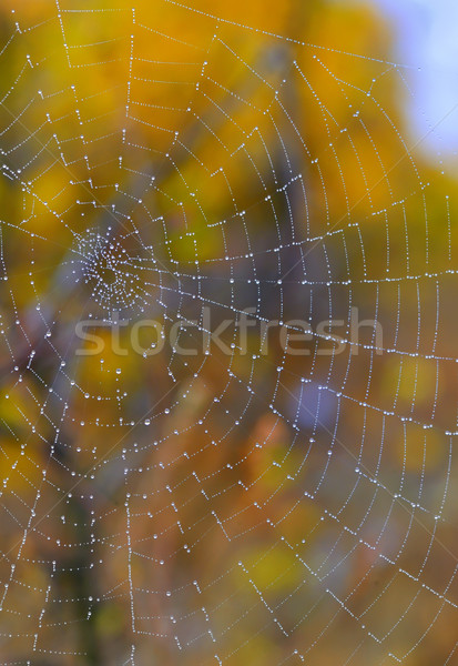 秋 クモの巣 クローズアップ 露 値下がり 水 ストックフォト © mady70