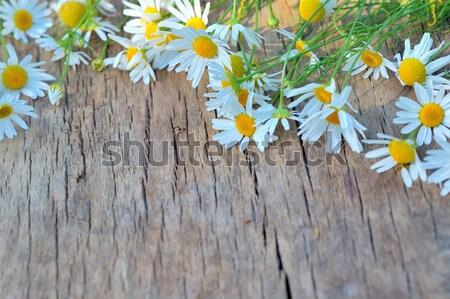 Chamomile flowers on a wooden background Stock photo © mady70
