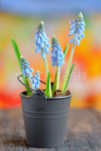 Flores pequeno balde primavera natureza luz Foto stock © mady70