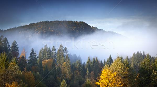 Görüntü güzel manzara sis çim orman Stok fotoğraf © magann