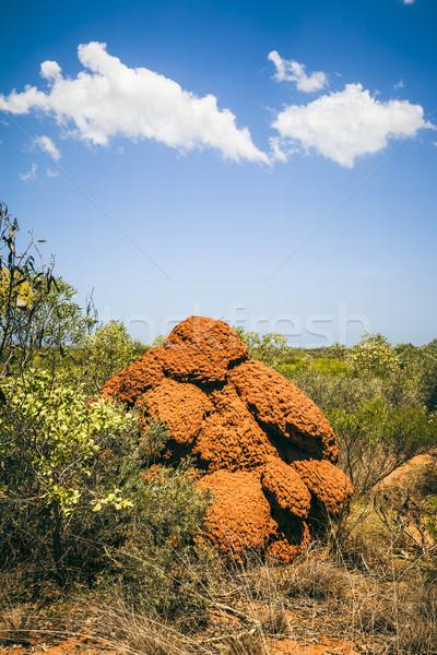 termite hill Stock photo © magann