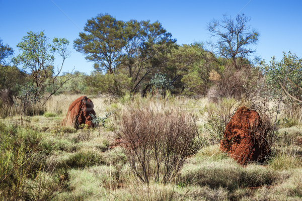 Australia bielec Hill obraz dwa domu Zdjęcia stock © magann