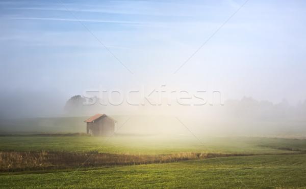 Stock fotó: Kép · gyönyörű · tájkép · köd · fa · fű