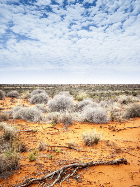 outback Stock photo © magann