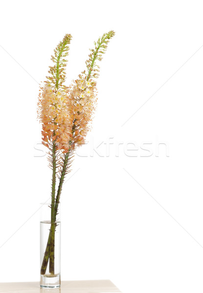 steppe candle Stock photo © magann