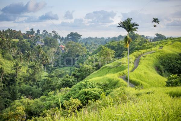 Bali kép szép díszlet fű mező Stock fotó © magann