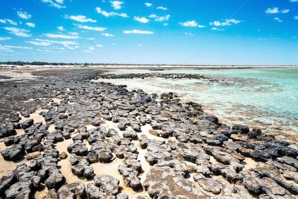 Stromatolites Australia Stock photo © magann