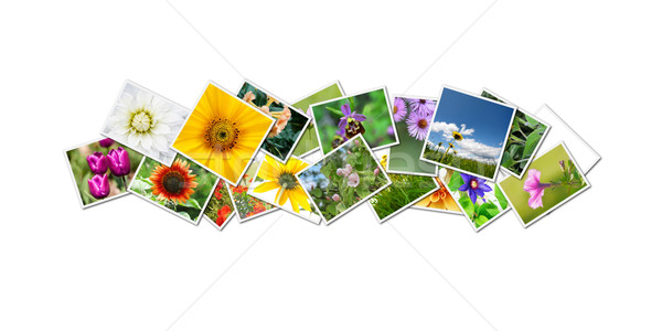 flowers collage Stock photo © magann