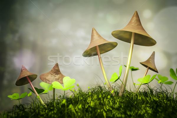 грибы изображение Nice лес природы зеленый Сток-фото © magann