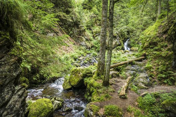 Ravenna Gorge Stock photo © magann