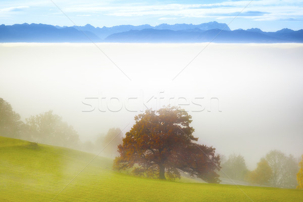 landscape covered in fog with the alps in the background Stock photo © magann