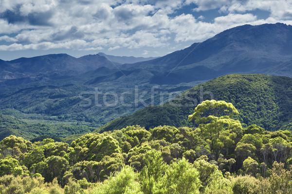 australia rain forest Stock photo © magann