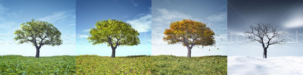 Négy évszak fa kép szép égbolt felhők Stock fotó © magann