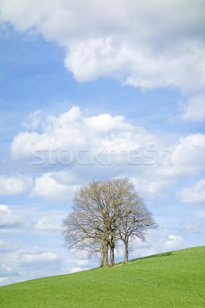 Bezlistny drzewo obraz wiosną niebo chmury Zdjęcia stock © magann