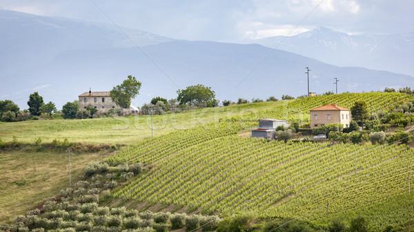 Casas videira oliva árvores imagem Itália Foto stock © magann