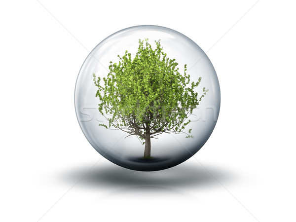 bubble with a tree Stock photo © magann