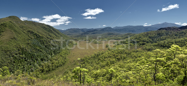 australia rain forest Stock photo © magann